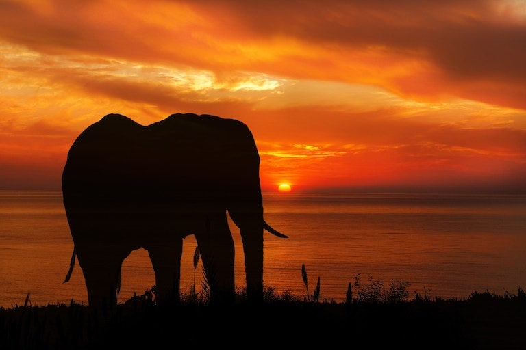 Elephant Sunset.